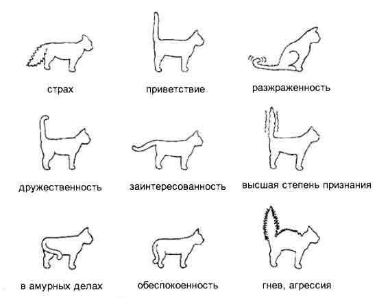 Как понять кота |
