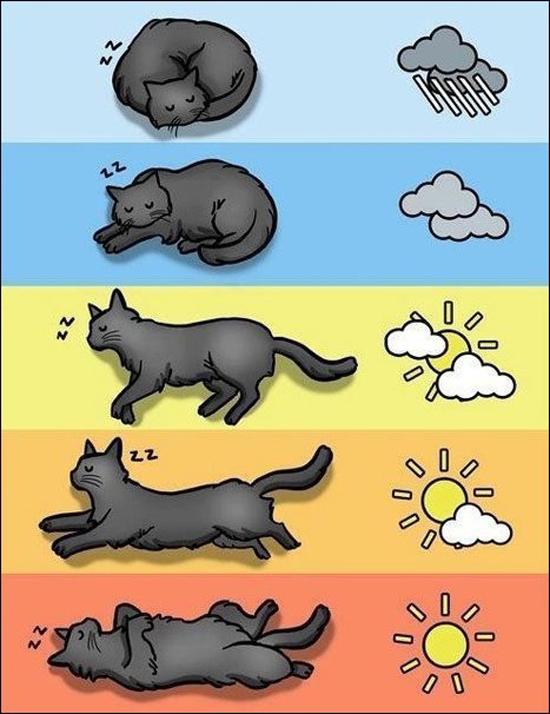 Кот как барометр и компас (два в одном)